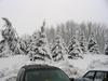 Snowtrees4