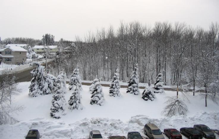 Snow1_1